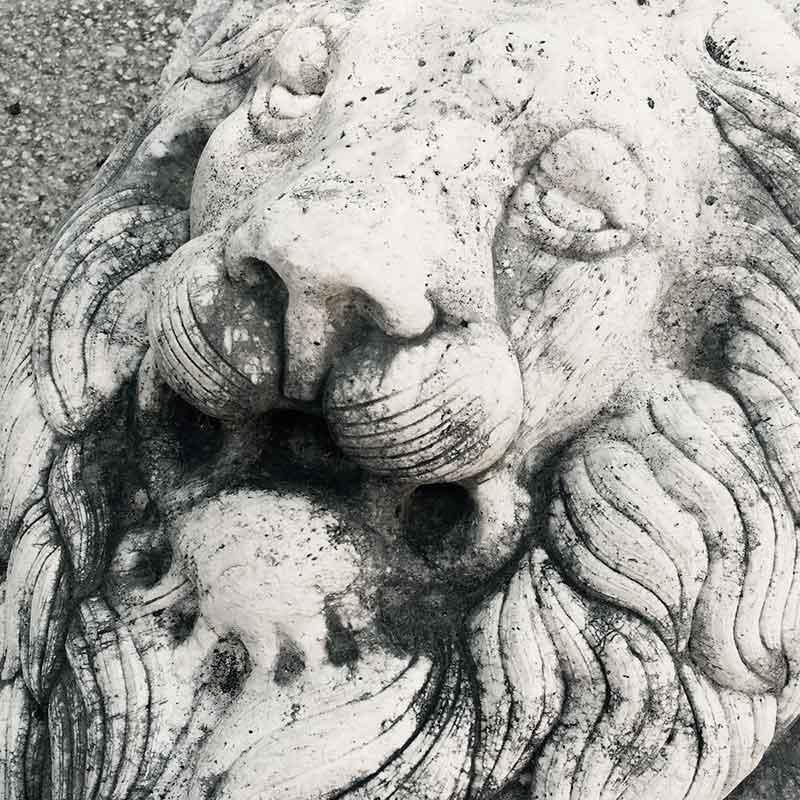 Testa di leone in rilievo in marmo statuario.